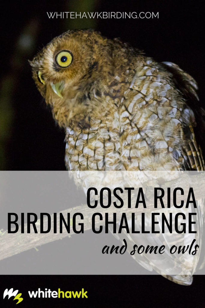 Costa Rica Birding Challenge and Some Owls - Whitehawk Birding: The Costa Rica Birding Challenge finished last week with an amazing number of birds seen or heard collectively: more than 550 species during the week. Check out some of the owls seen during the competition!
