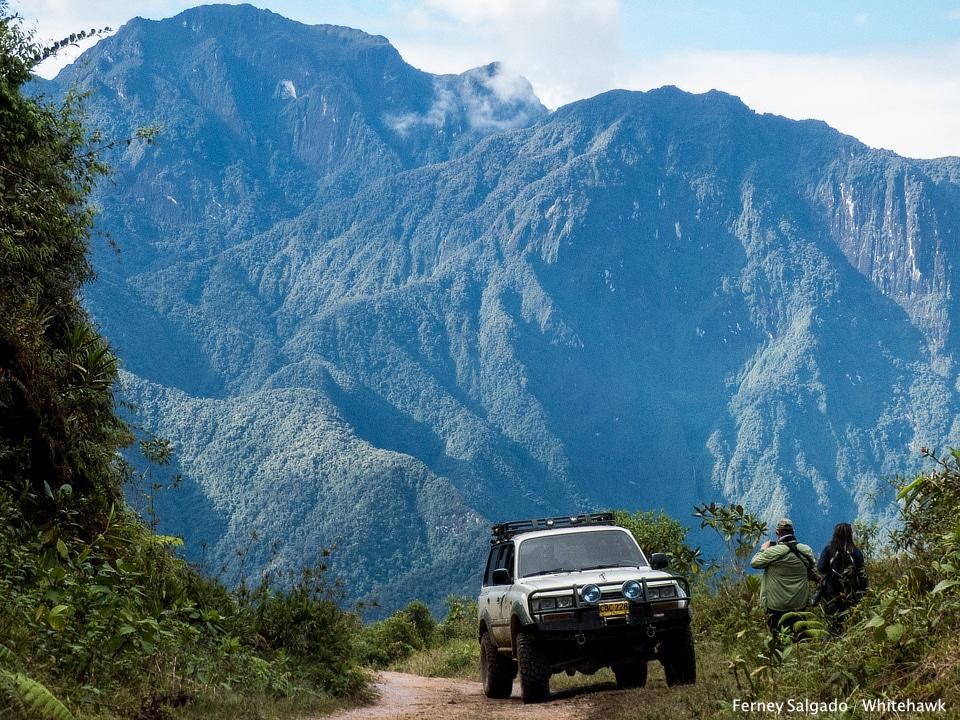 Montezuma Birding Colombia Whitehawk Birding