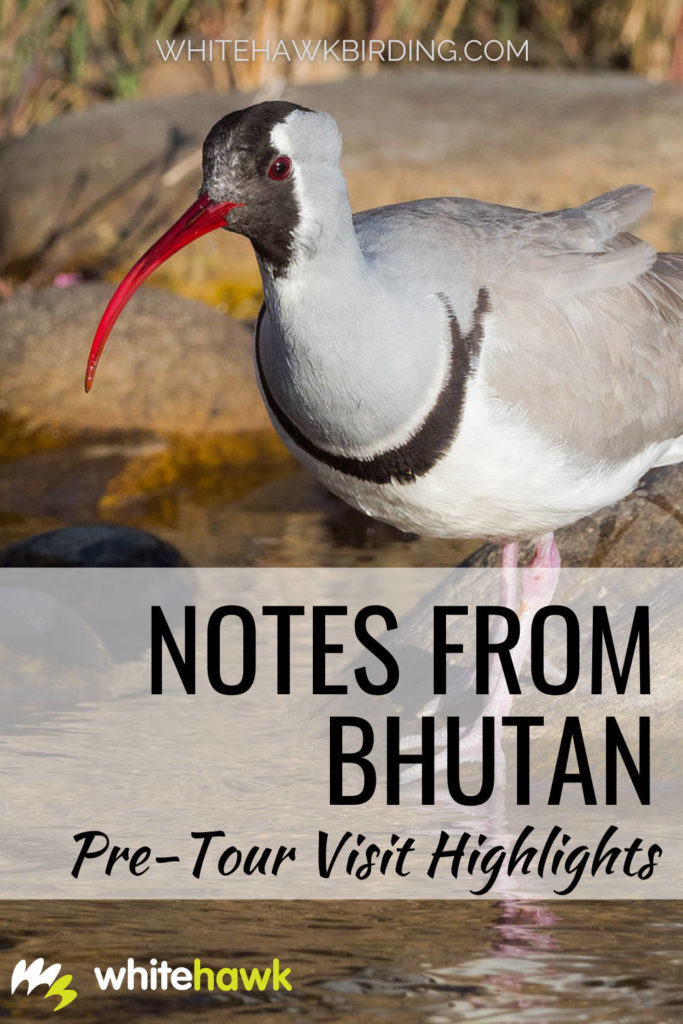 Notes from Bhutan: Pre-tour visit highlights - Whitehawk Birding: A pre-tour visit to Bhutan left us awestruck with the beauty and nature this small Asian country has to offer. Read all about the trip.