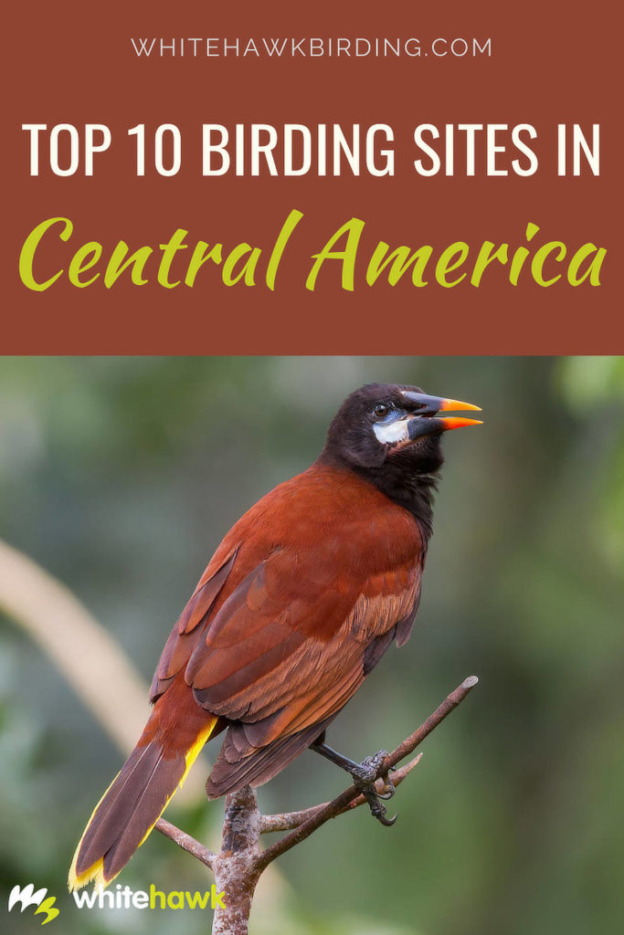 Top 10 Birding Sites in Central America - Whitehawk Birding: Check out our top 10 places to go birding in Central America.