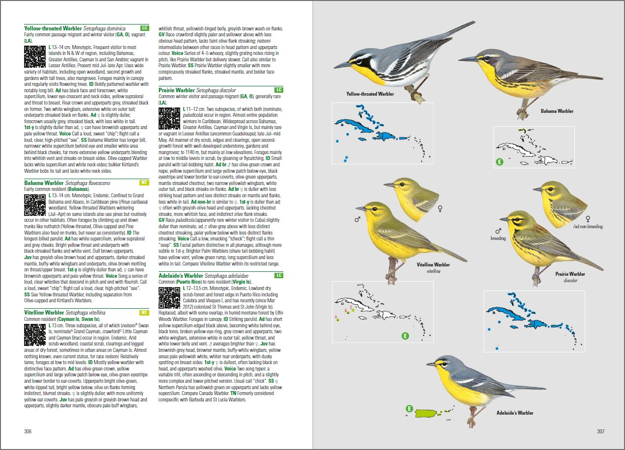 An example of the new book by Lynx Edicions: North American warblers have now good illustrations that are useful for ID in the field
