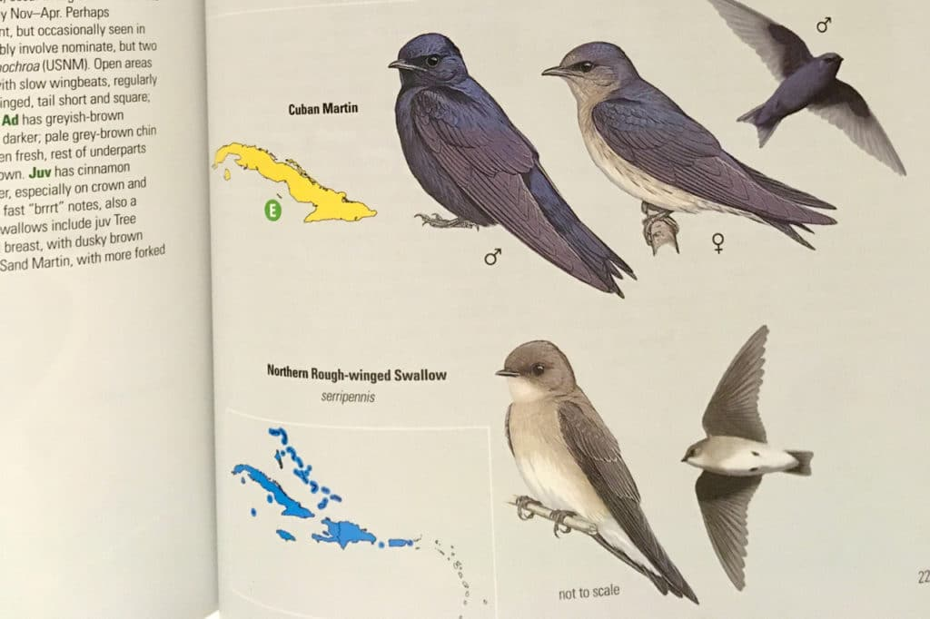 Maps for each species can be found next to its illustrations, unlike in most other guides where it's located on the text page