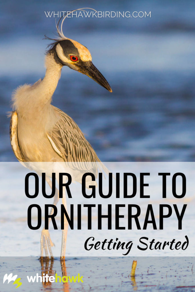 Our Guide to Ornitherapy: Getting Started - Whitehawk Birding: You may be wondering what is ornitherapy and how do I do it? Here is our guide to getting started in mindful birding.