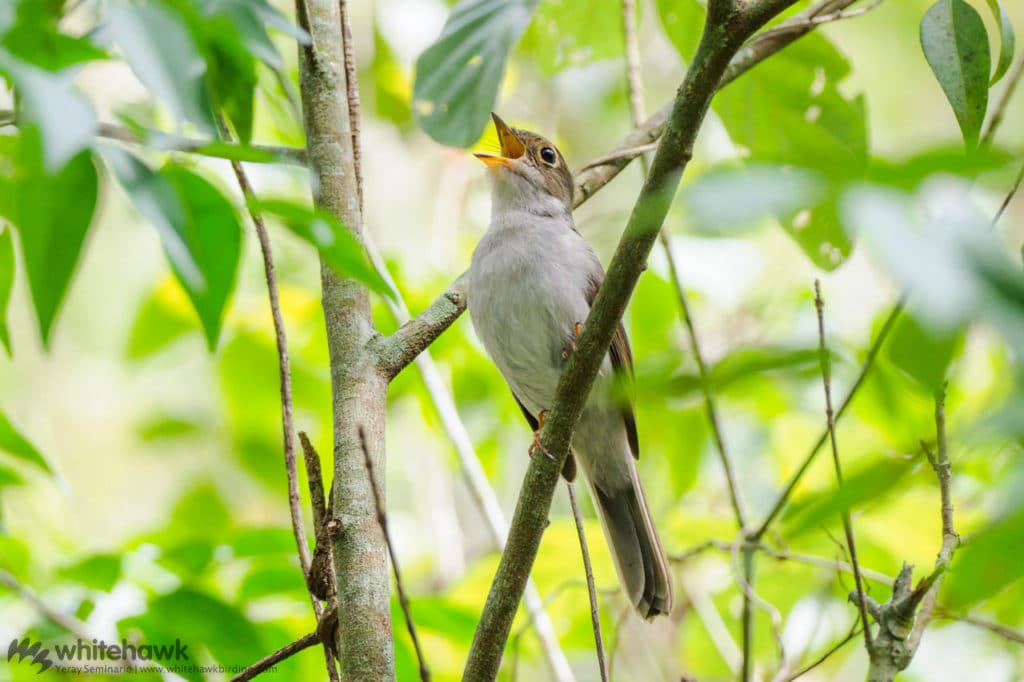 Cuban Solitaire