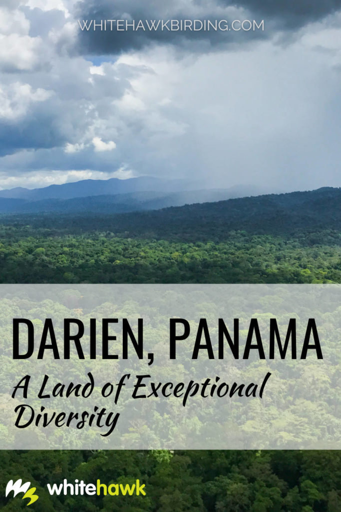 Darien Panama: A Land of Exceptional Diversity - Whitehawk Birding: Once one of the most untouched corners of the world, eastern Panama's Darien province has so much to offer and even more waiting to be discovered.