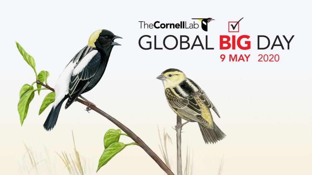 2020 Global Big Day eBird