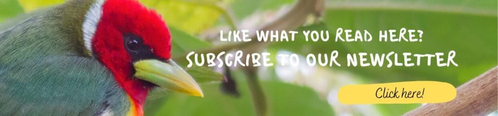 Banner Newsletter Subscribe Whitehawk Birding
