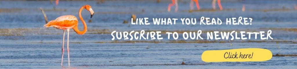 Banner Newsletter Subscribe Whitehawk Birding