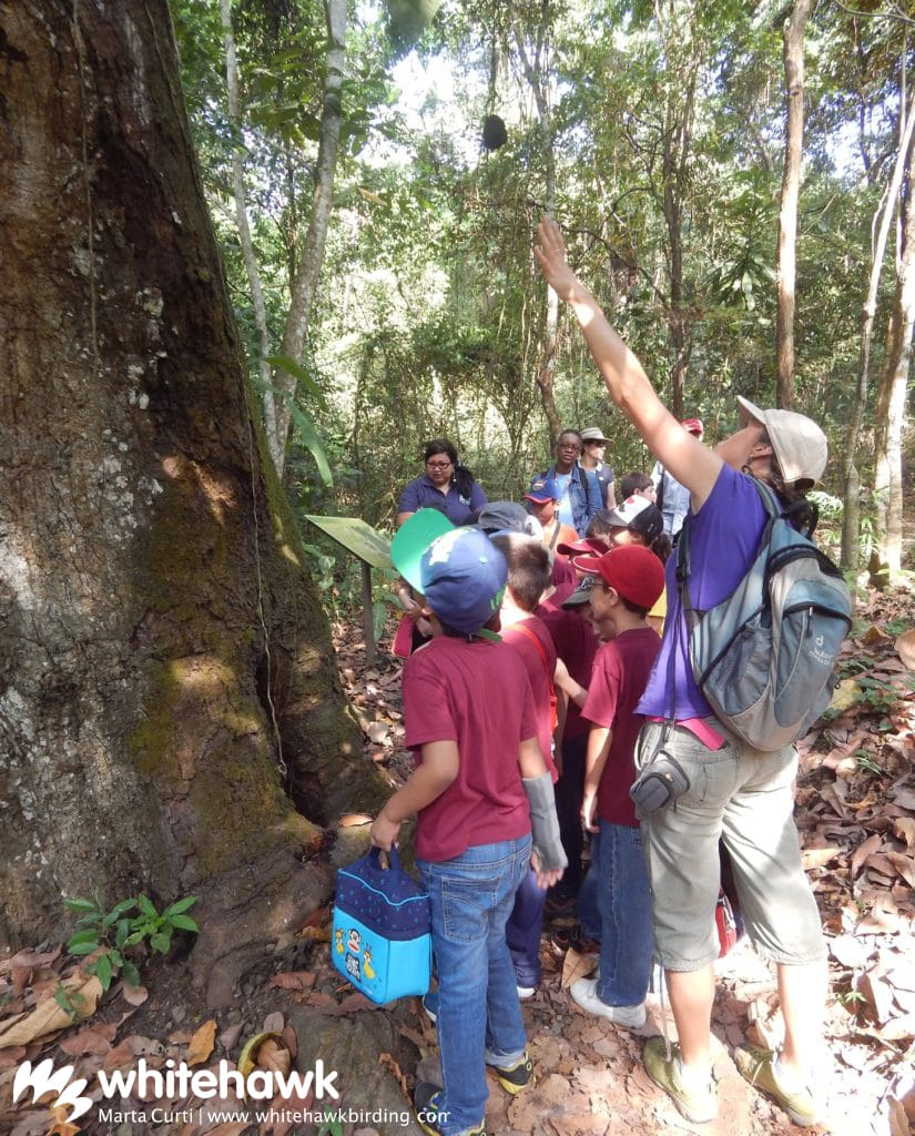 Jr. Naturalist Program Balboa Whitehawk Birding Panama