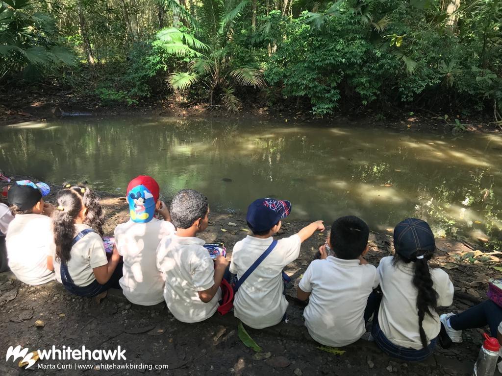 Jr Naturalist Program Panama Whitehawk Birding
