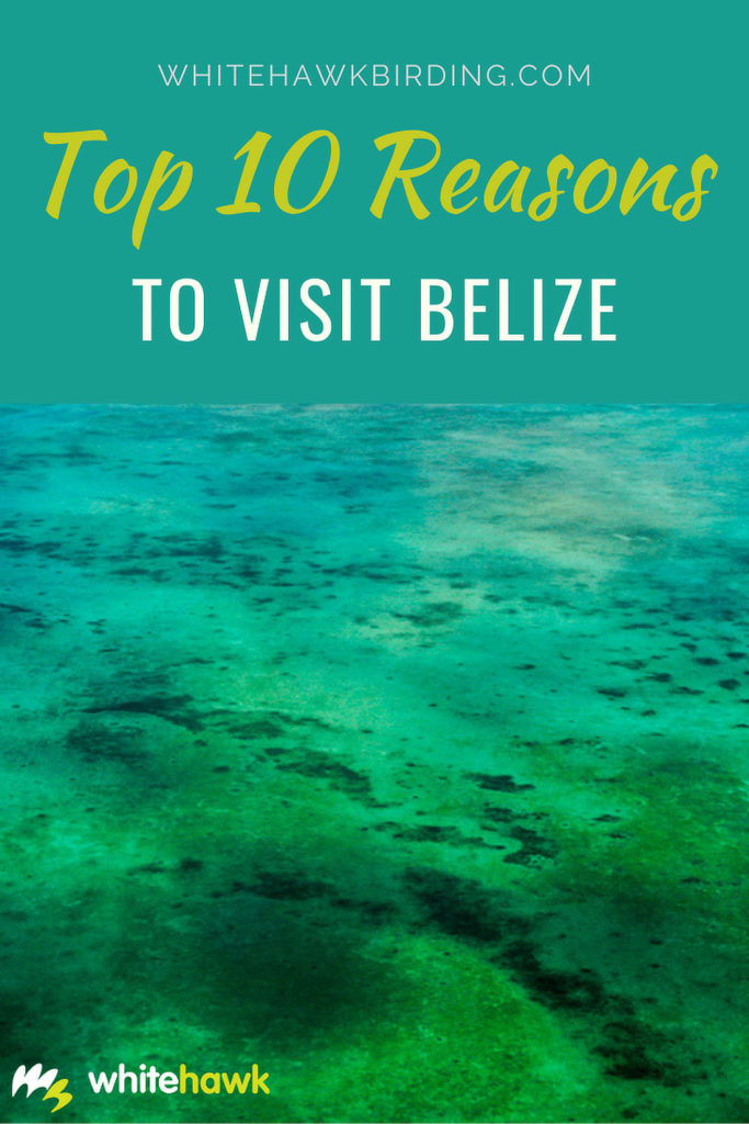 Top 10 Reasons to Visit Belize - Whitehawk Birding: Belize is small but diverse country jam-packed with natural and cultural wonders in every corner.