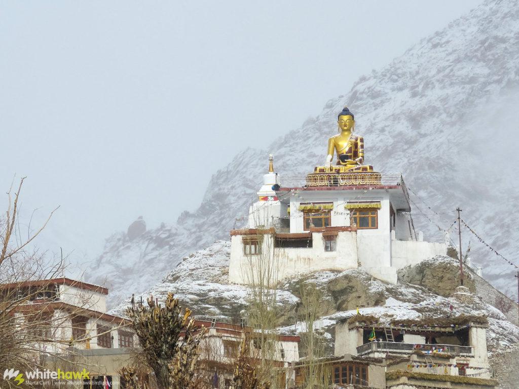 Hemis Sukpachen Monastery India Whitehawk Birding
