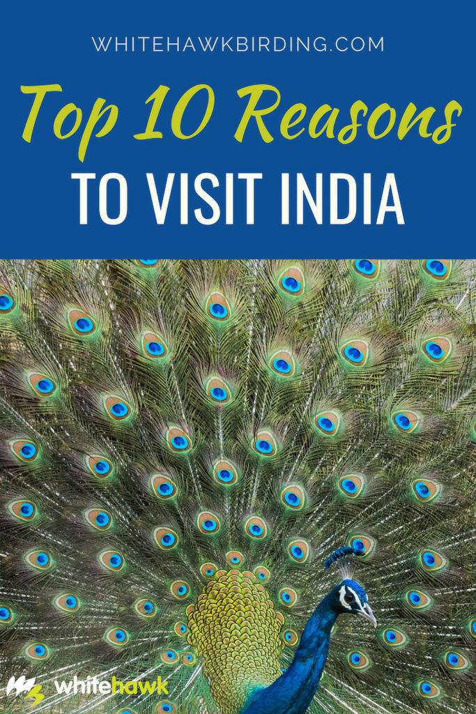 Top 10 Reasons to Visit India - Whitehawk Birding: India is definitely a place worth visiting, but where to start? The subcontinent is packed with things to do and see. Here's a look at our top 10 list of reasons to visit India.