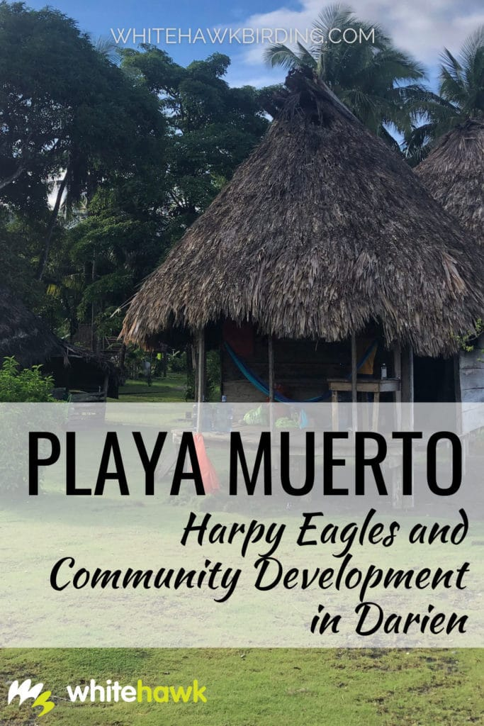 Playa Muerto: Harpy Eagles and Community Development in Darien, Panama - Whitehawk Birding: The Embera people of the remote community of Playa Muerto in Darien National Park, Panama, awaits tourists and visitors to share their nature, culture and community. Learn about how we are engaging and working with Playa Muerto in Darien.