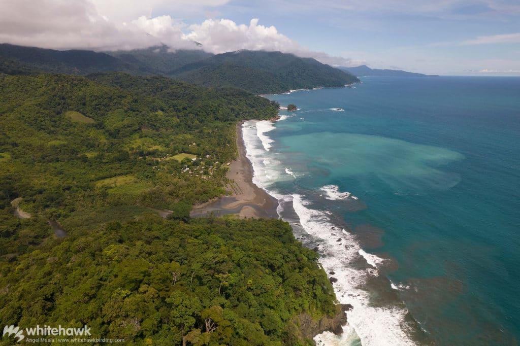 Playa Muerto Darien Panama Whitehawk Birding